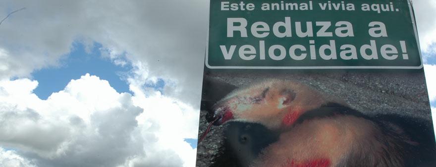 Monitioramento de fauna atropelada